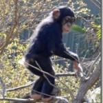 進化しない進化論への反論―7月14日「あすなろラボ」林修さん授業感想(9)