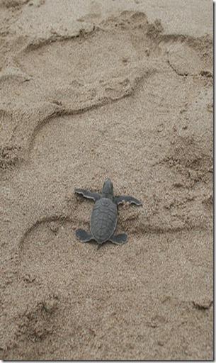 2014-05-18_turtle-61133_640