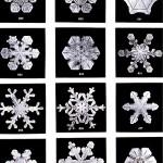 笑ってはいけない《雪の華》セレクション