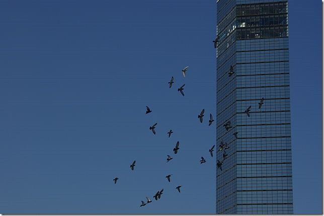 20141129_Chiba_Port_Tower_3