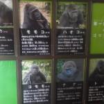 体験記・はじめての上野動物園―会いに行けるゴリラ