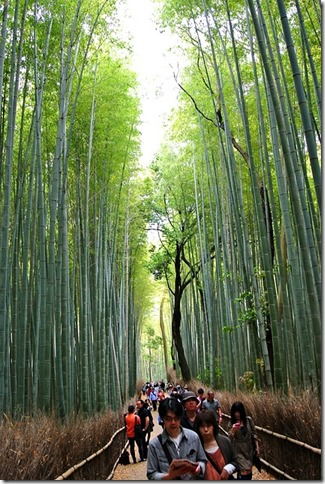 20150617_bamboo-forest-547293_640