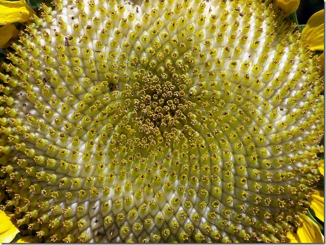 20150816_sunflower-17870_640