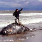 【鑑定報告書】クジラ死骸「征服」写真の「誰?どこ?いつ?」