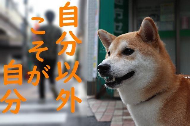 jibun-20200502_shiba-inu-3600226_640